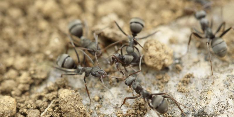 ant colony outdoors