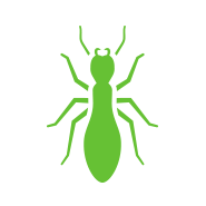green termite treatment icon on white backdrop